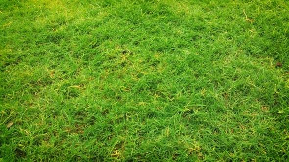 Warn Grass